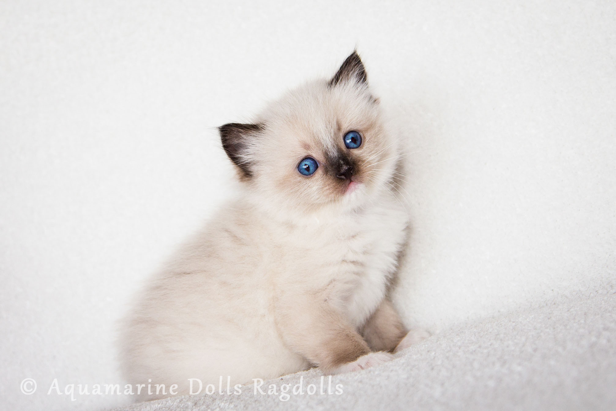 Blue Diamond Cat Litter