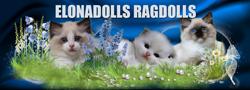 Elonadolls Ragdoll Cattery